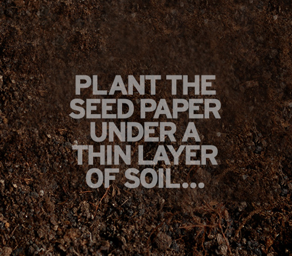 plant the seed paper under a thin layer of soil...