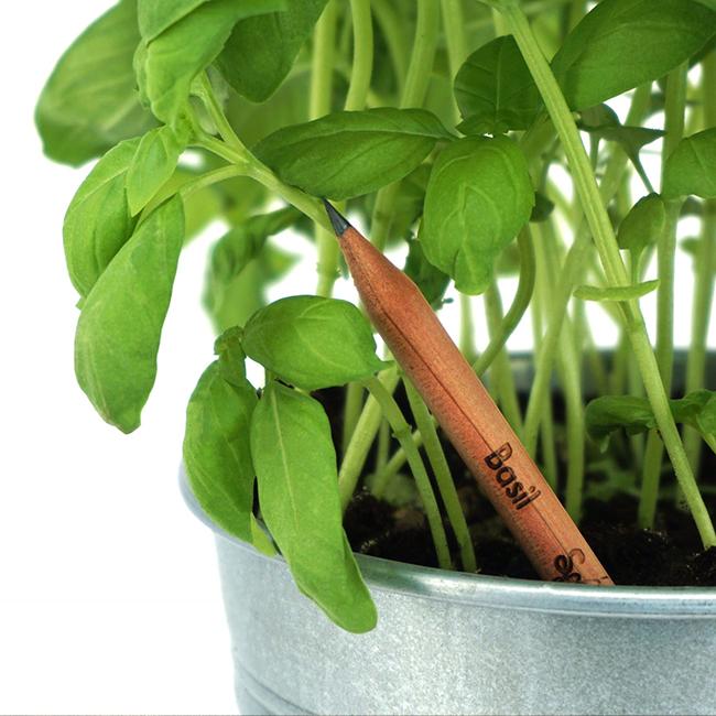 plantable pencil with logo